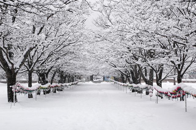 151213_snow01