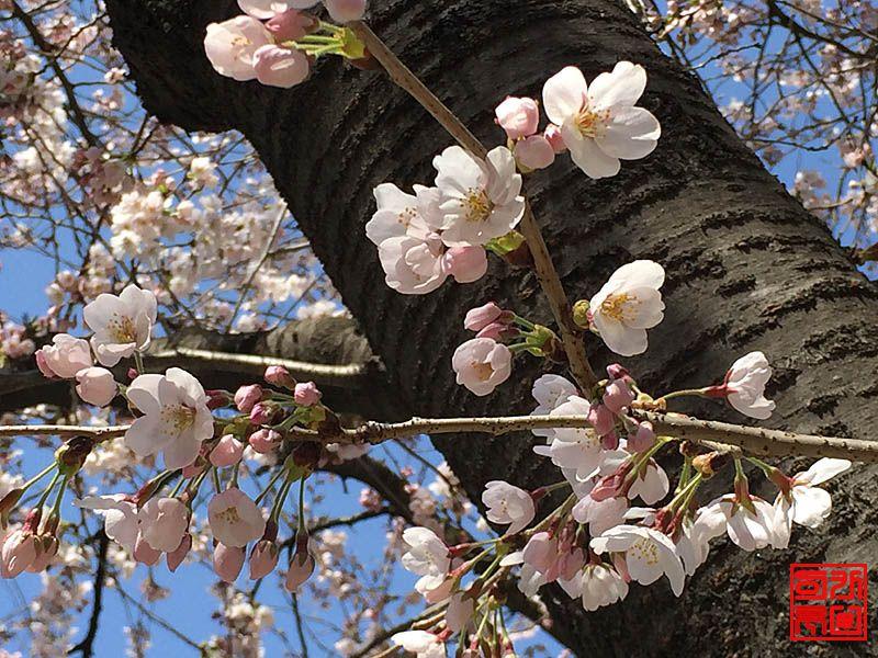 160330_flower1