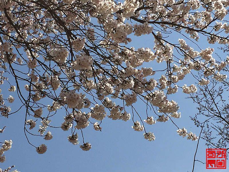 160330_flower2