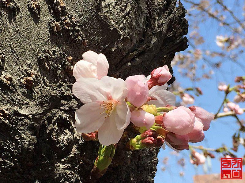 160330_flower3