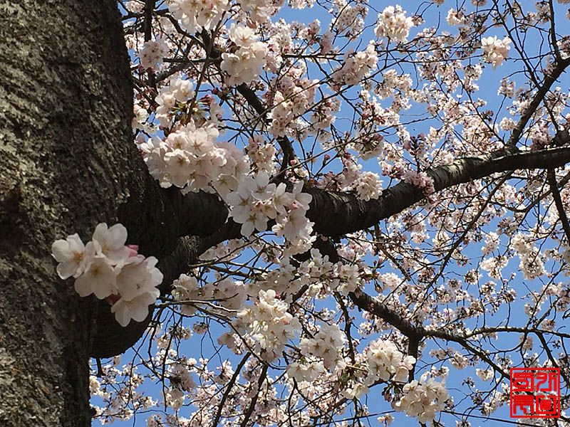 160330_flower4